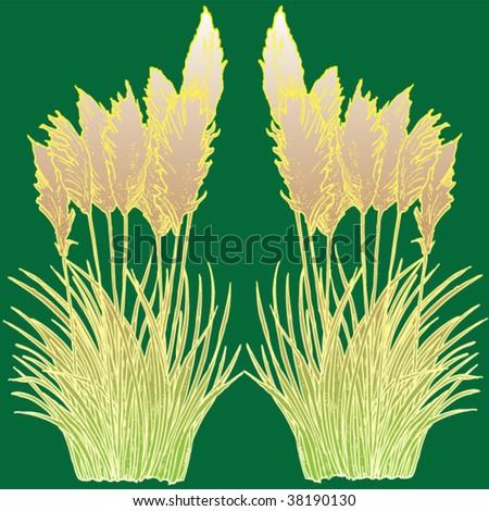 pampas grass - stock vector