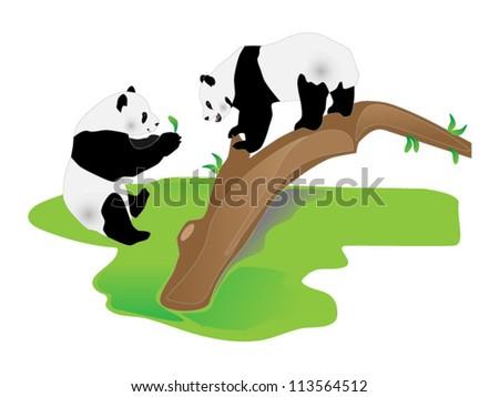 Panda bears - stock vector