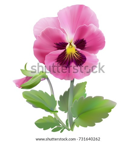 Hand drawn vector illustration garden stock vector 731640262 pansy flower hand drawn vector illustration of a garden variety of viola tricolor on transparent mightylinksfo Choice Image
