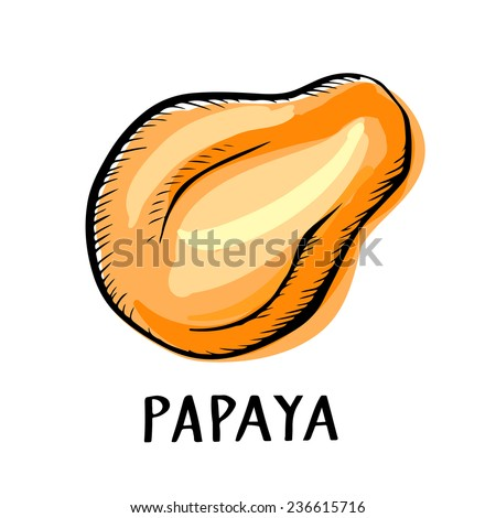 Papaya fruit closeup color hand drawn icon isolated on a white background, art logo design