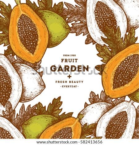 Papaya fruit vintage design template. Botanical  food illustration. Engraved papaya. Vector illustration