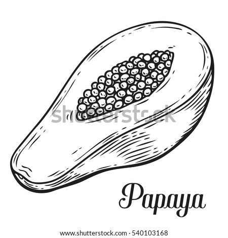 papaya fruit clipart black and white - photo #13