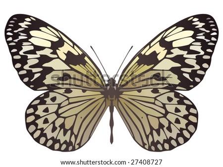 Paper Kite butterfly - stock vector