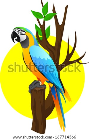 Bird of paradise cartoon stock photos illustrations and vector art