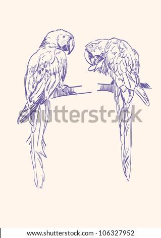 Parrot isolated hand drawn vector llustration - stock vector