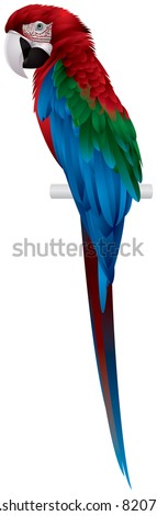 Parrot, Red-and-green Macaw, large mostly-red Green-winged bird, the largest of the Ara genus, vector image - stock vector