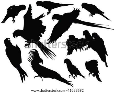 parrot silhouettes - vector - stock vector