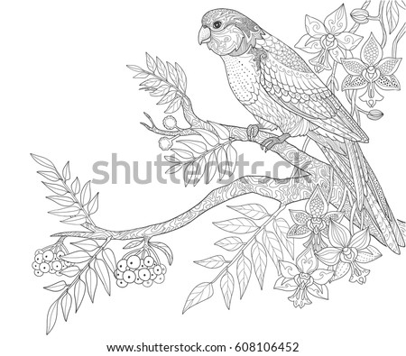 Parrot Sit On A Branch With Berries Adult Coloring Book Page Doodle Tropical Birds