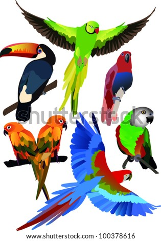 parrots collection - stock vector