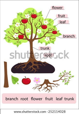 parts tree clipart tree structure trunk root stock vector. Black Bedroom Furniture Sets. Home Design Ideas