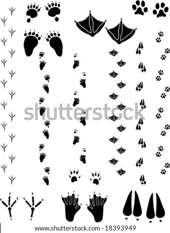 Paw prints and tracks. Top : Black Bear, Seagull, Cat. Bottom: Crow, Beaver, Deer Vectors are all clean objects easy to color or add background. All non-black areas are transparent in vector file - stock vector