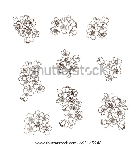 Peach blossom flower set and cherry blossom