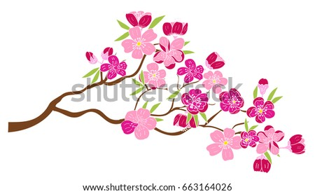 Peach blossom plant and Sakura flower vector