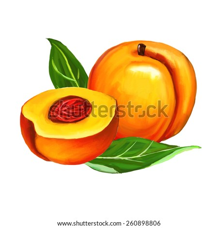 peaches set  vector illustration  hand drawn  painted watercolor - stock vector