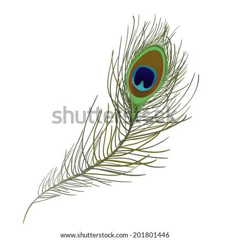 Peacock Feather isolated. vector illustration