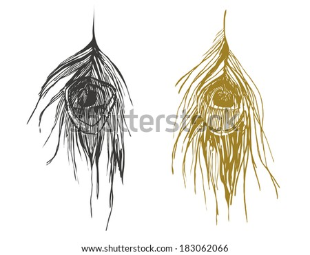 peacock feathers - stock vector