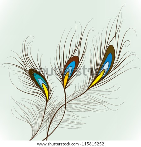 Peacock Feathers  Elements for design, EPS10 Vector background - stock vector