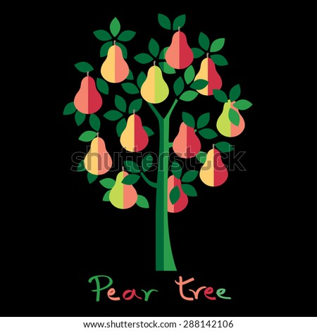 Pear tree. Colorful pears vector illustration. - stock vector