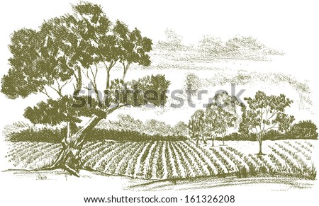 Pencil drawing of a field of crops with a tree in the foreground