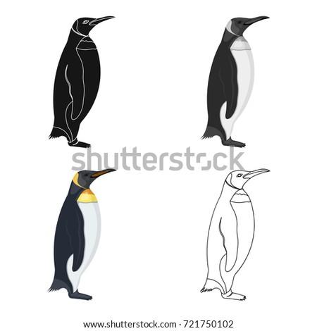 A study of the penguin a flightless bird