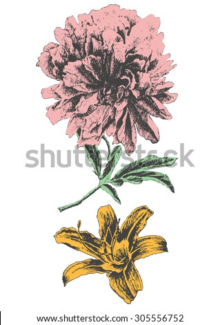 Peony and lily. Vector. Hand drawn.