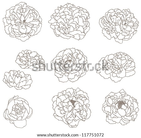 peony flower line art - stock vector