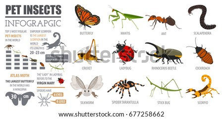 pet insect