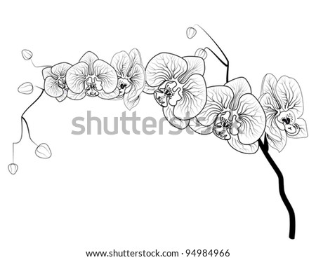 Phalaenopsis orchid contour image - stock vector
