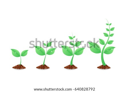 Phases plant growing. Planting tree infographic. Evolution concept. Seeds sprout in ground. Vector illustration.