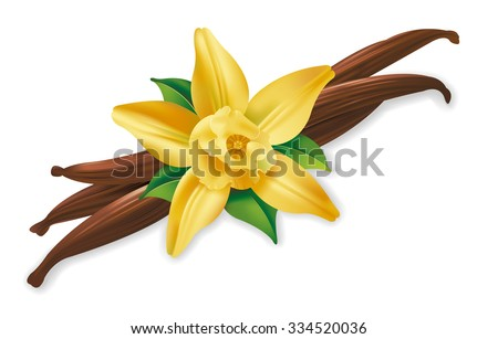 Photo realistic illustration of vanilla pods and flower on white background. - stock vector