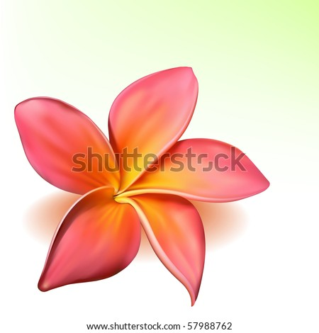 Photo-realistic vector beautiful pink plumeria flower - stock vector