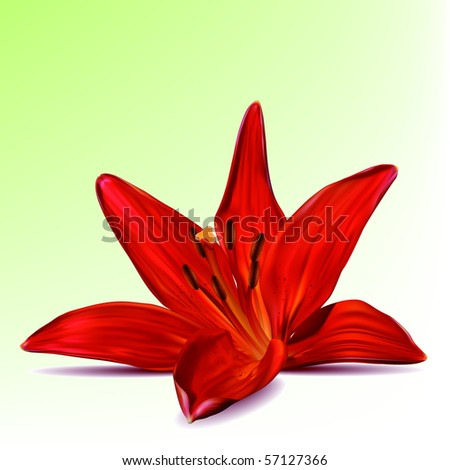 Photo-realistic vector beautiful red lily - stock vector