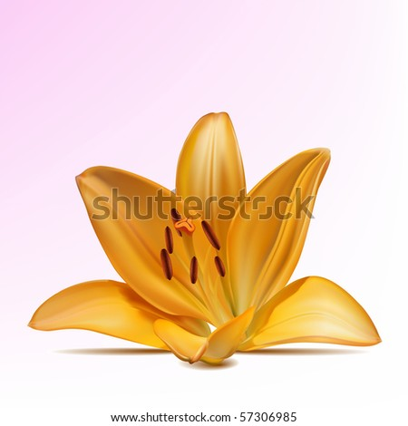 Photo-realistic vector beautiful yellow lily - stock vector
