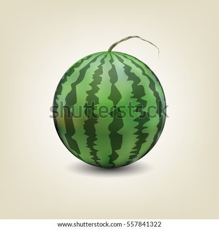 Photo realistic watermelon isolated on white background with shadow, vector illustration.