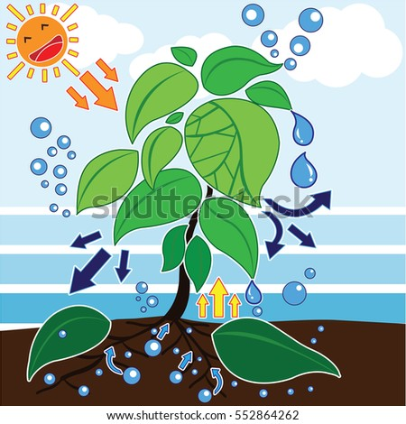 photosynthesis process used by plants other stock photo photo rh shutterstock com Fish Clip Art Smoke Clip Art