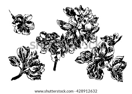picture set blooming apple tree branches with buds and leaves, ink sketch hand-drawn vector illustration
