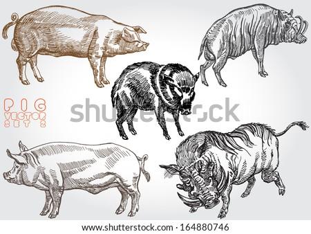 pig vector set 2 - stock vector