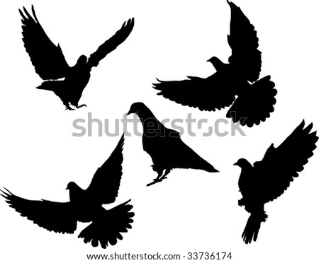 Pigeon in different fore shortenings.Vector