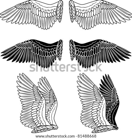 Pigeon wings isolated on white - stock vector