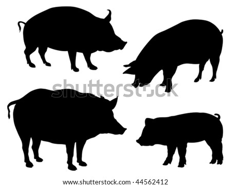 Pigs - stock vector