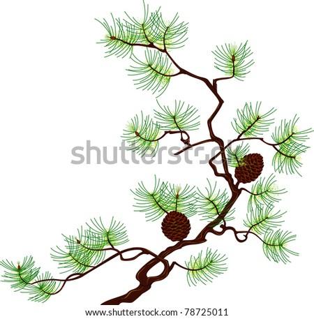 Pine - stock vector
