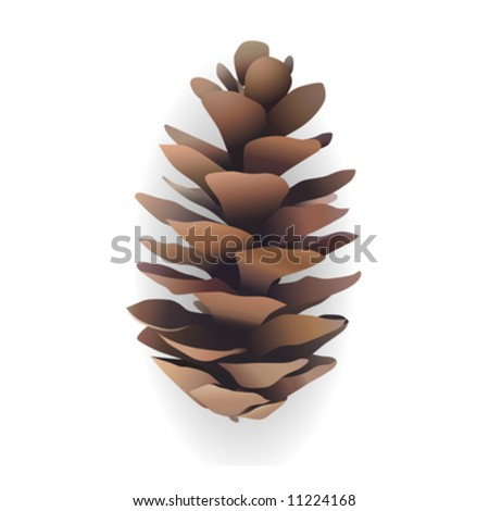 Pine cone on a white background - stock vector