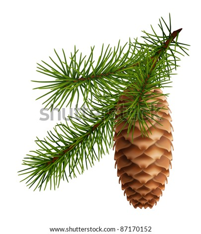 Pine cone with branch, 10eps - stock vector
