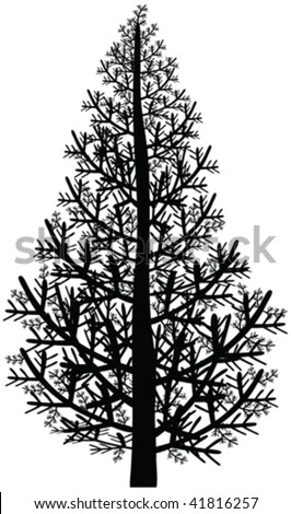 pine tree silhouette - vector - stock vector