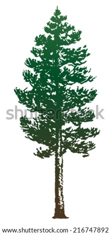 pine trees isolated on white background - stock vector