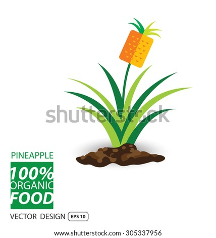Pineapple, fruits vector illustration. - stock vector
