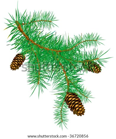 Pinecone pine branch - stock vector