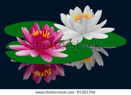 Pink and white water lilies eps8 - stock vector