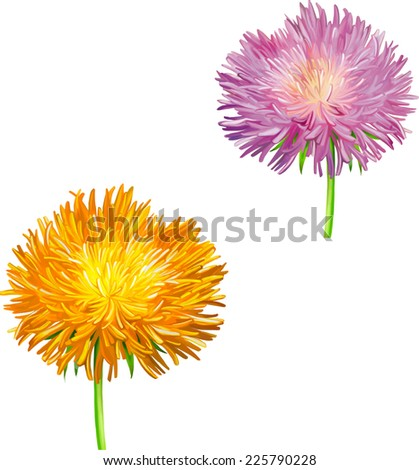 Pink yellow thistle flower aster flower stock vector 225790228 pink and yellow thistle flower aster flower illustration isolated on white mightylinksfo