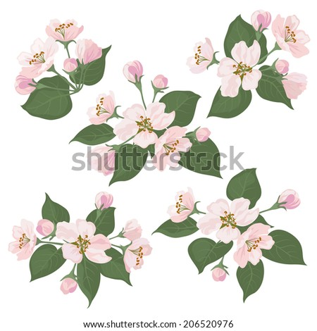 Pink apple tree flowers and green leaves, set isolated on white background. Vector - stock vector